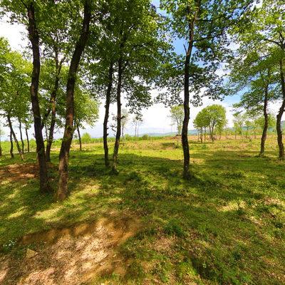 Muncurlu Park Göleti 5